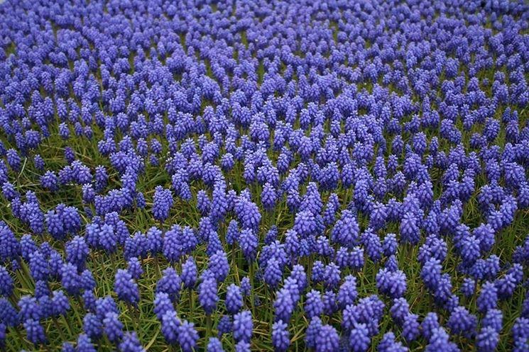 Non solo viole piante da giardino cosa coltivare in for Solo piante