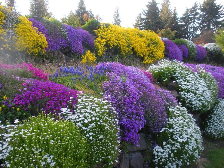 Piante perenni piante da giardino piante perenni arbusti for Piante verdi perenni da giardino