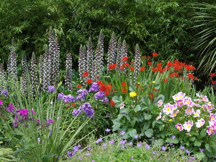 piante da giardino perenni fiorite idea creativa della