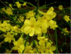 piante invernali