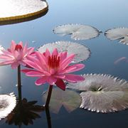 piante in acqua