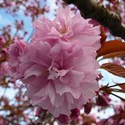 fiore di pianta