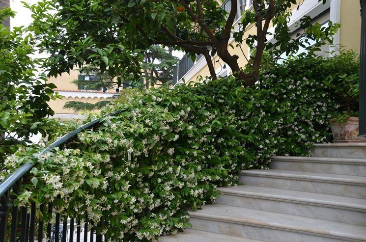 piante rampicanti rampicanti rampicanti