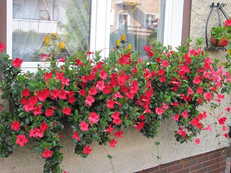 Sundevilla fiore