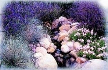 giardino roccioso fiorito