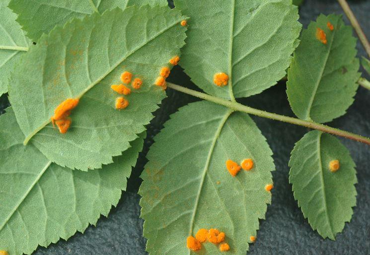 Bocciolo di rosa giallo-arancio
