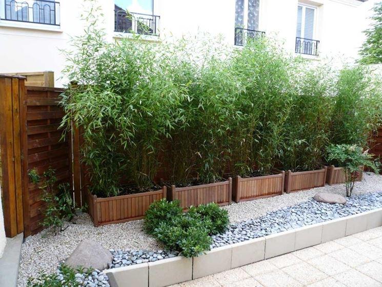 Siepe di bambù