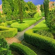 Siepe bassa sempreverde