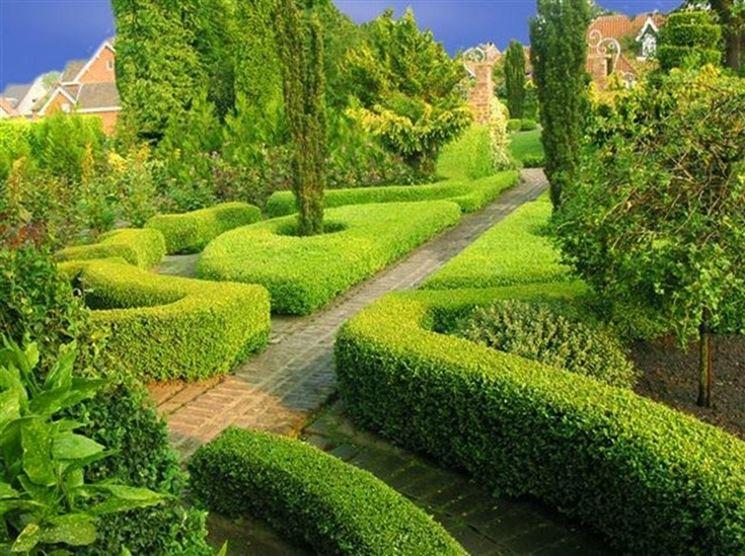 Siepe bassa siepi come realizzare una siepe bassa - Siepi da giardino ...