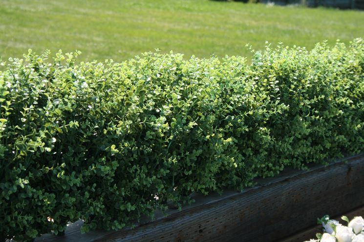 Un bel connubio: siepe finta e fiori freschi