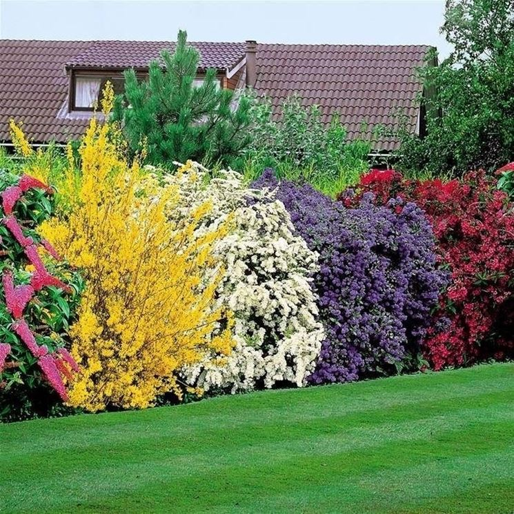 Siepe fiorita con fiori multicolore e di diverse specie