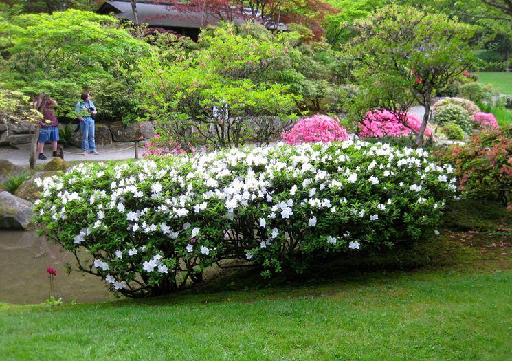 esempio di Siepe fiorita