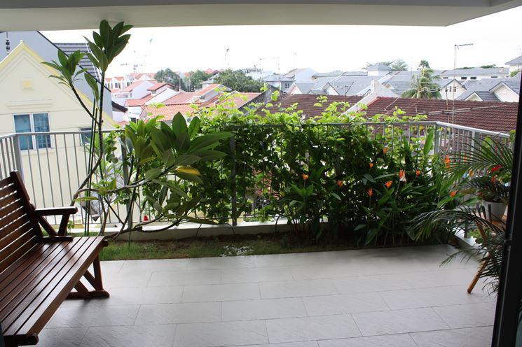Siepi da balcone siepi come realizzare le siepi per il - Piante sempreverdi per terrazzi ...