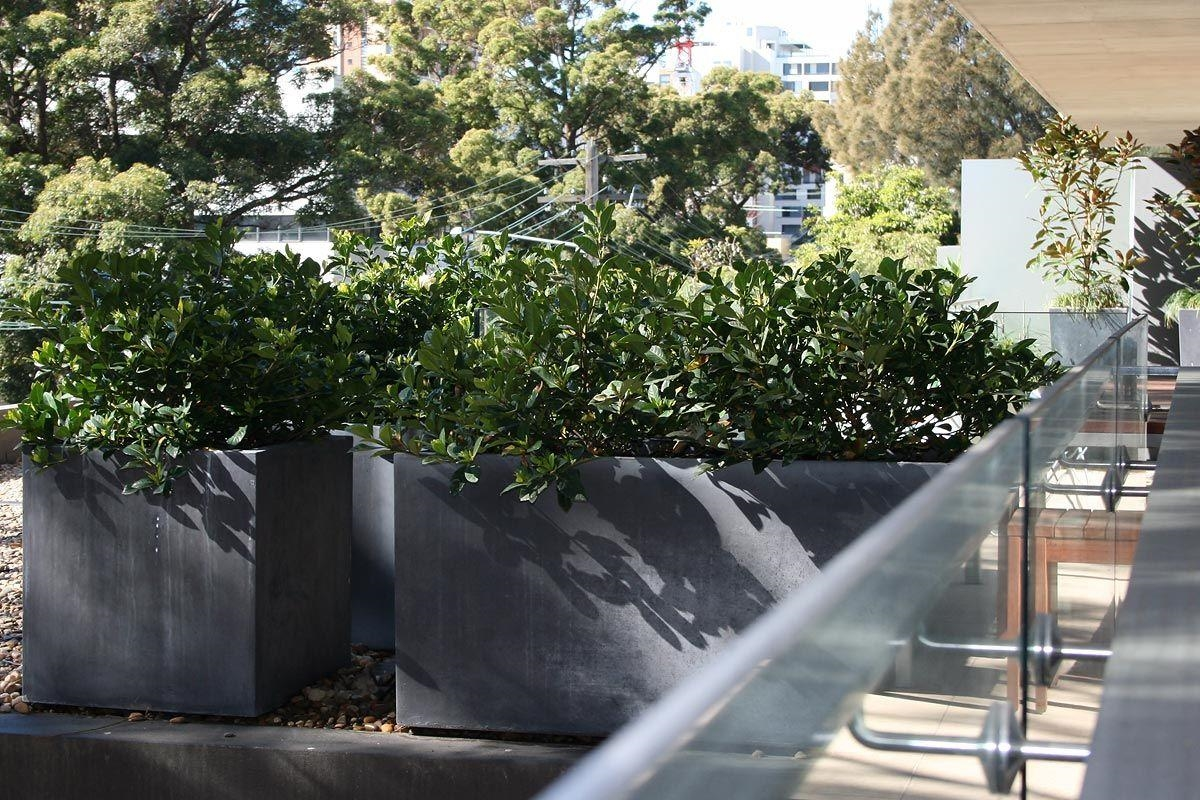 siepi per terrazzi - 28 images - siepi per terrazzi siepi scegliere ...