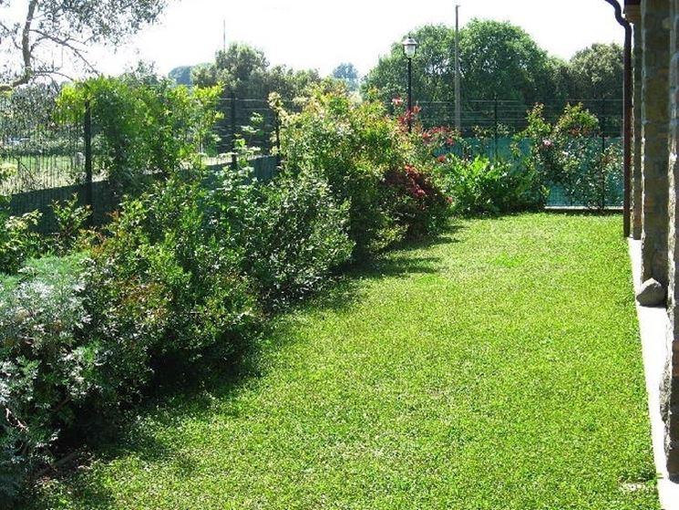 Siepi miste siepi siepi con piante diverse - Siepi da giardino fiorite ...