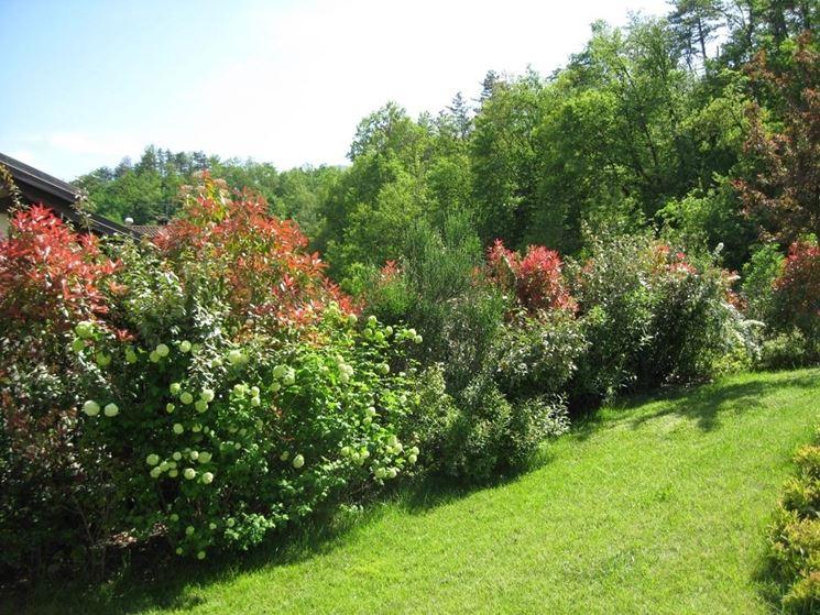 Siepi miste siepi siepi con piante diverse for Piante da cespuglio