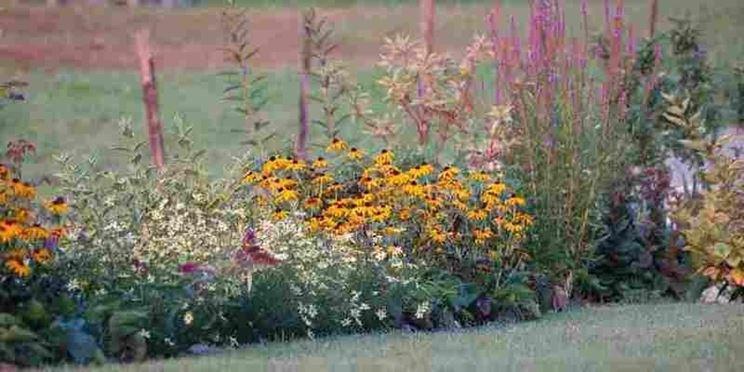 Siepe mista di fiori