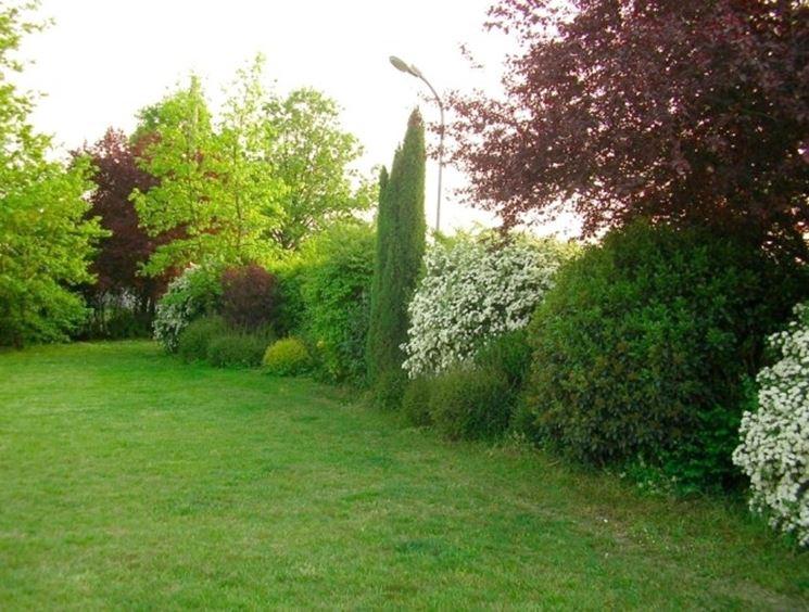 siepi miste - siepi - siepi con piante diverse - Siepe Da Giardino Piccolo