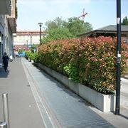Siepi - Barriere antirumore per terrazzi ...