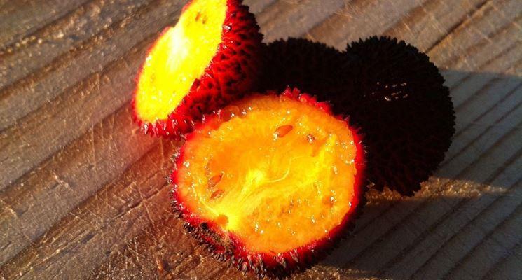 frutto corbezzolo