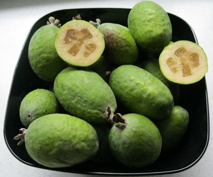 acca frutto