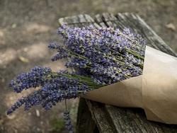 fiori di lavanda