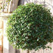 Piante da giardino resistenti al freddo intenso for Cespugli fioriti perenni resistenti al freddo