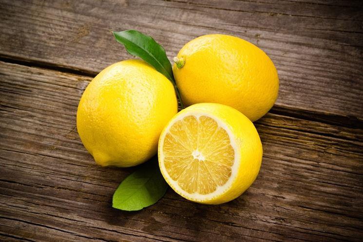 Limoni primofiori