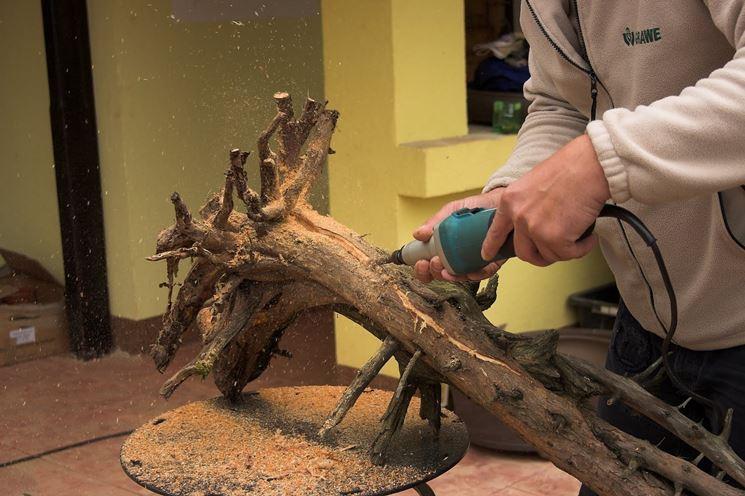 legno di tasso