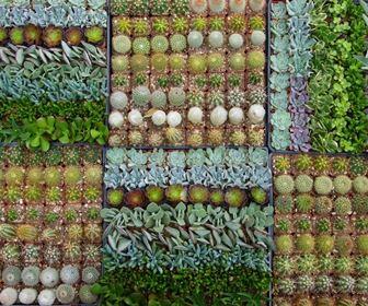 Domande e Risposte piante Grasse