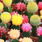mini piante grasse prezzi