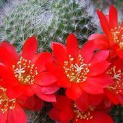 piante grasse fiorite da esterno