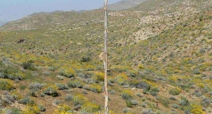 propagare agave