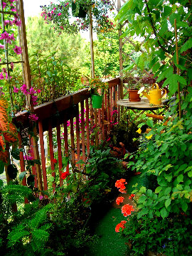 Scatta il verde - Speciali - Scatta il verde - Speciali sul giardinaggio