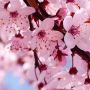 elenco fiori dalla a alla z