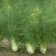 come coltivare l orto