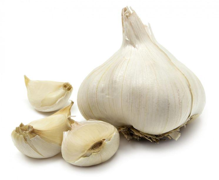 fiore dell'aglio