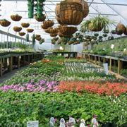 serra per piante
