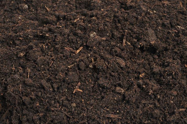 terreno per zucchine