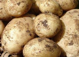 Patata  -  Solanum tuberosum