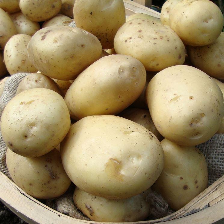 tipologia di patate
