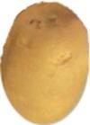 """Solanum tuberosum"""""""