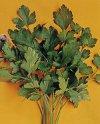 """Petroselinum hortense"""""""