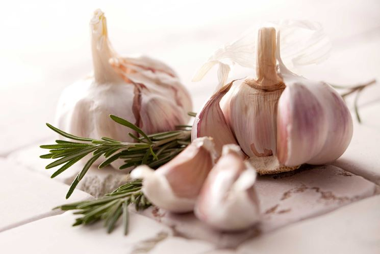 Bulbi aglio