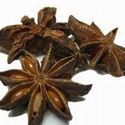 anice stellato pianta