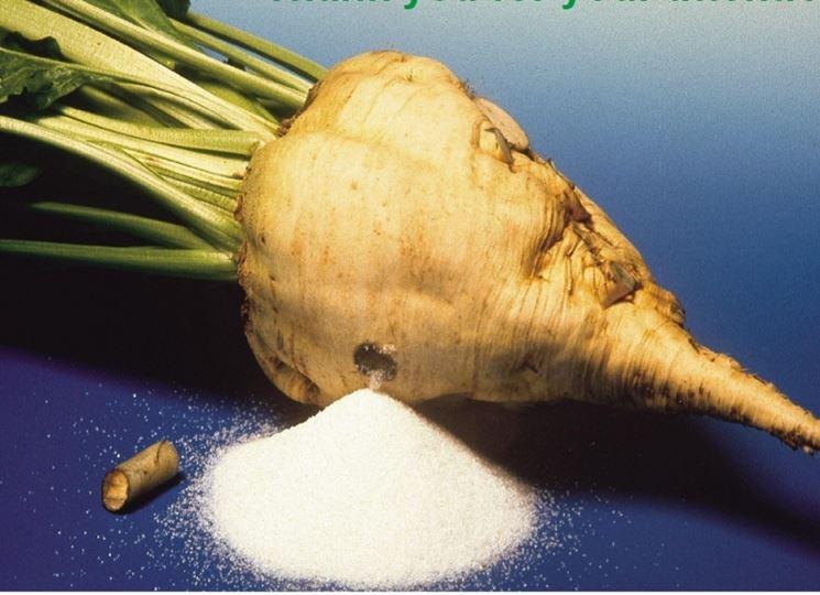 Barbabietola zucchero