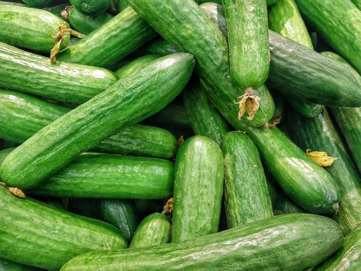 Cetrioli raccolti