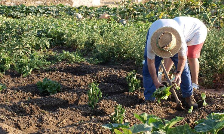 orto coltivazione