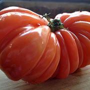 Coltivare pomodori coltivazione ortaggi coltivazione for Coltivare meloni
