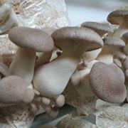 coltivare funghi